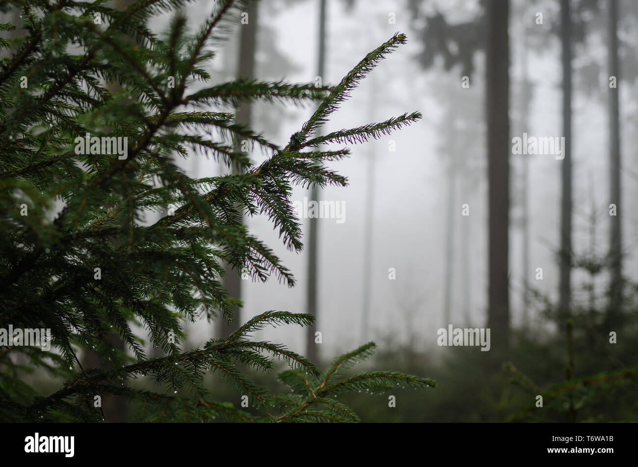 Nebel im Wald - Stock Image