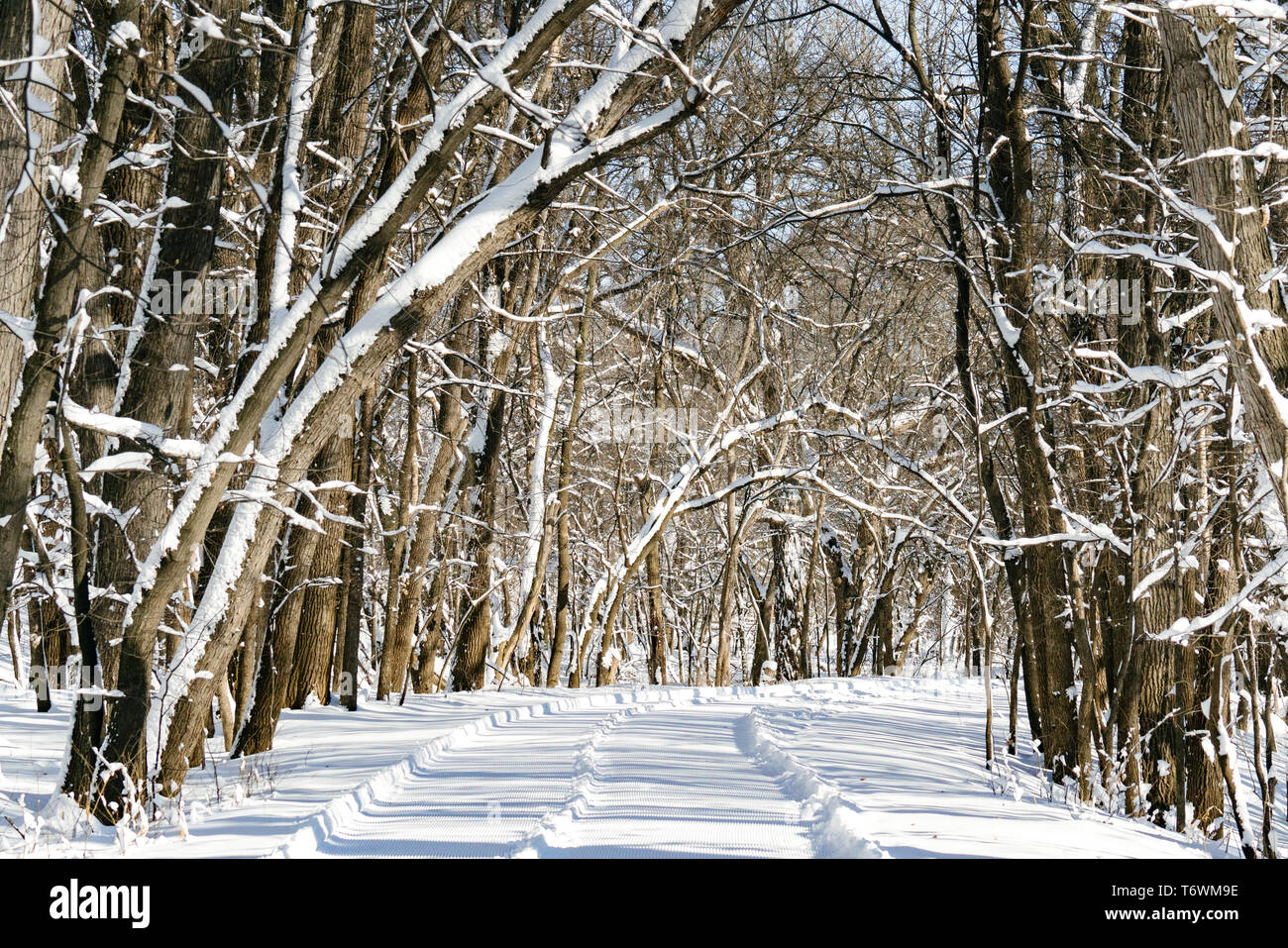 A freshly groomed winter trail - Stock Image