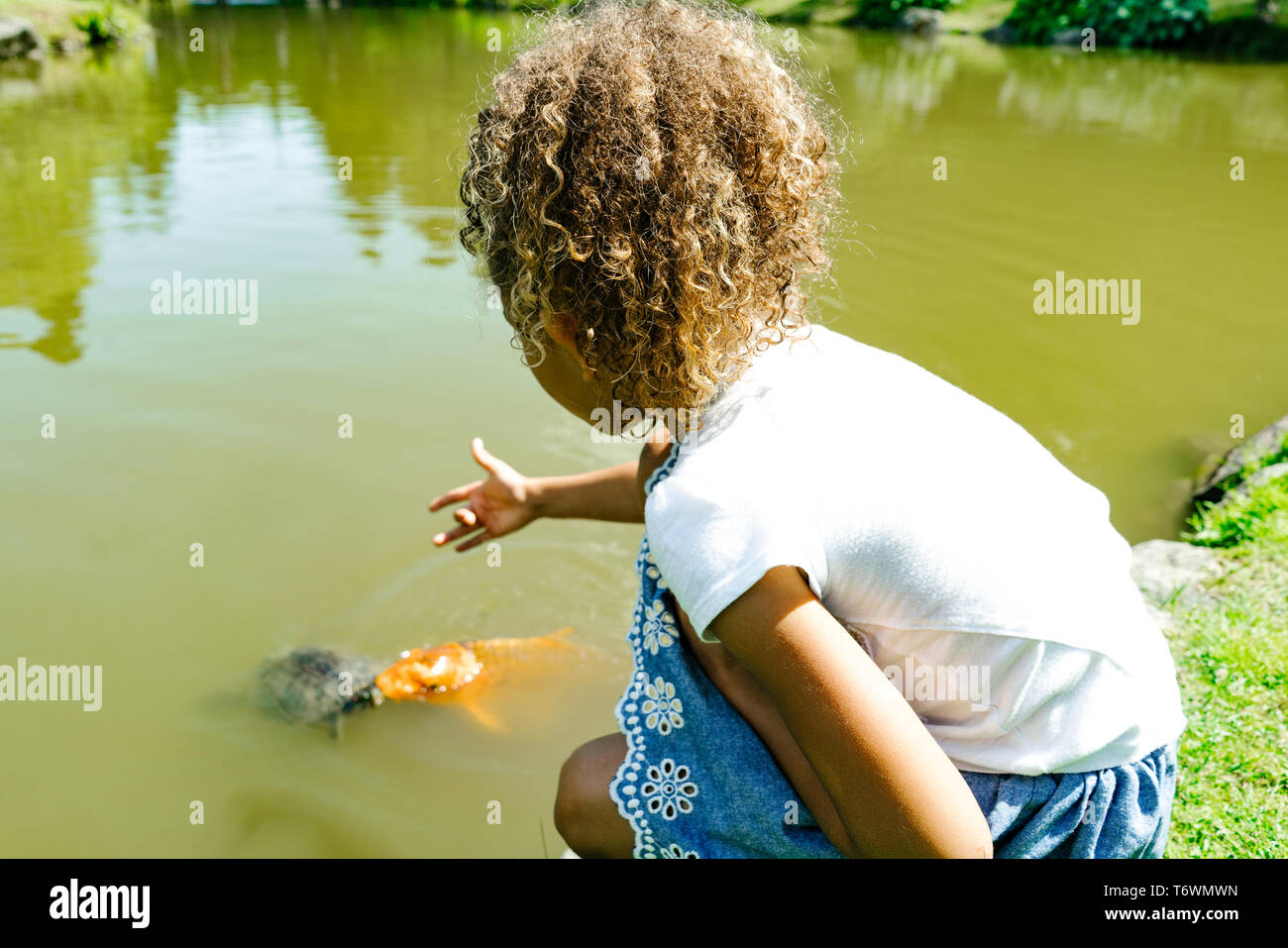 A young girl reaches out towards a turtle and a fish at a public park - Stock Image