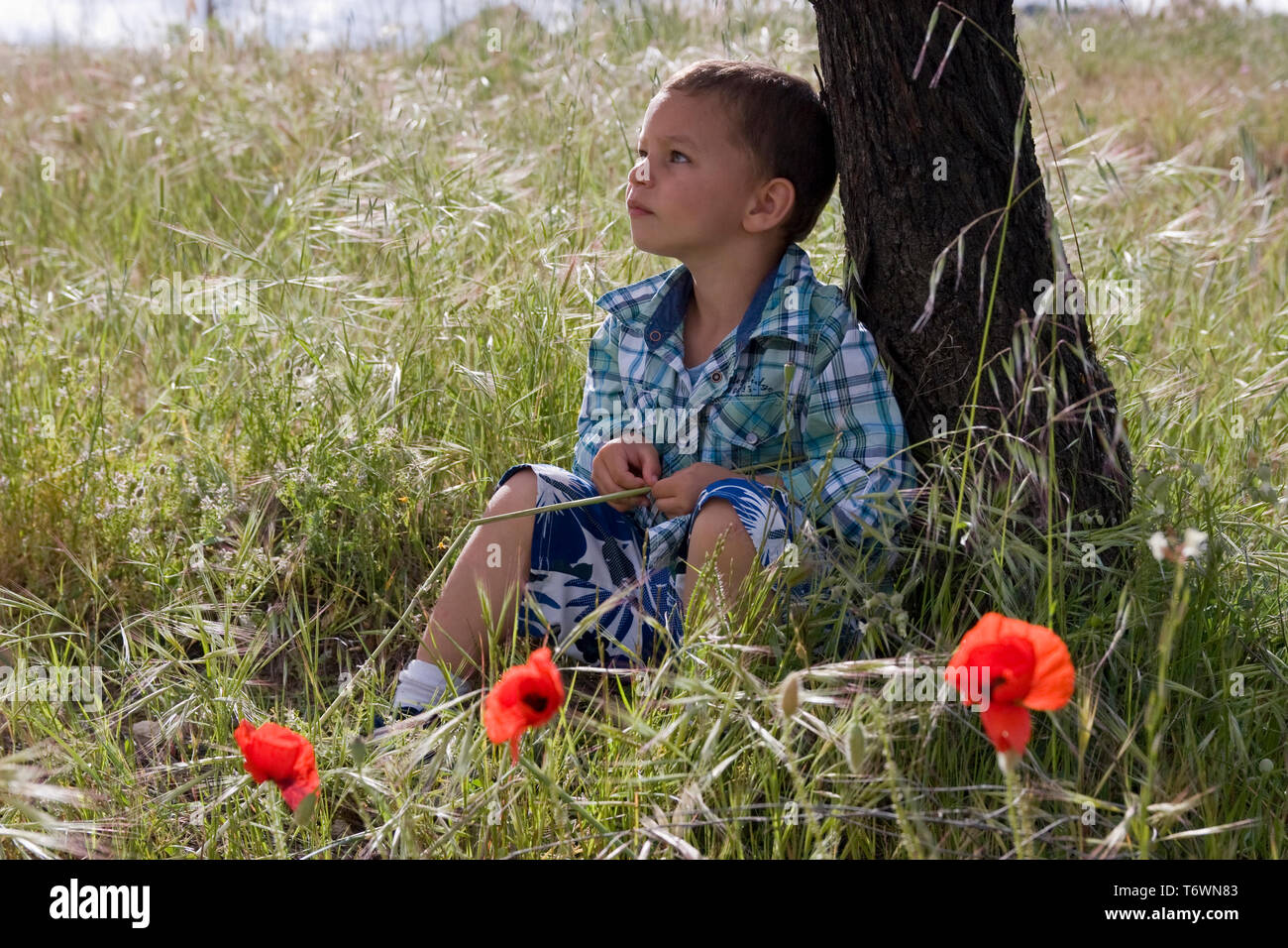 contemplative little boy sitting under tree in field of poppies Stock Photo