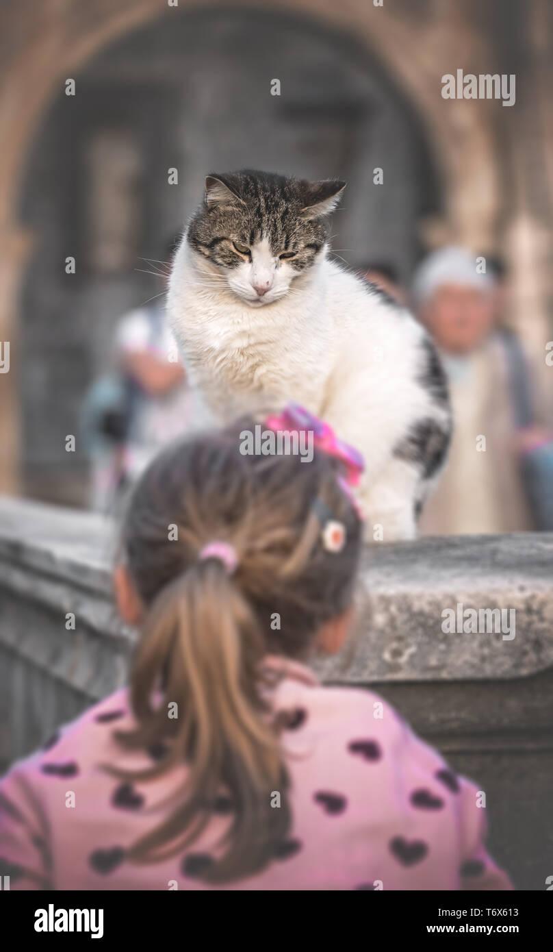 Cute girl teasing a cat - Stock Image