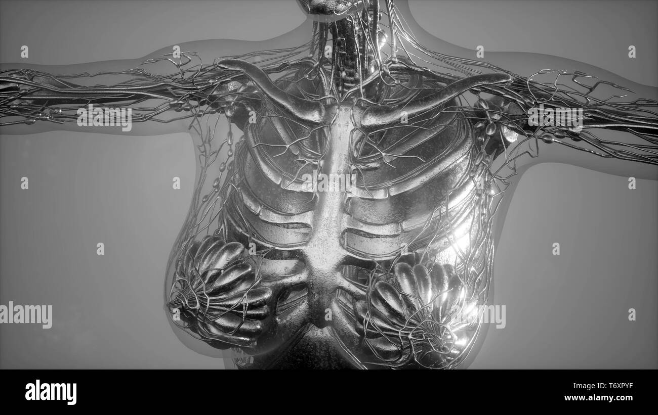 Anatomy Tomography Scan of Human Body - Stock Image