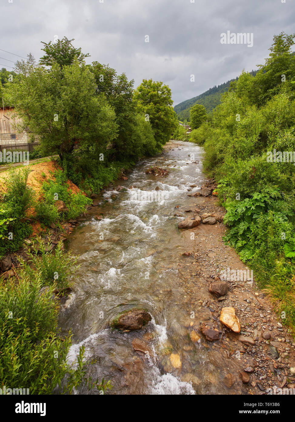 Beautiful mountain river. Tourism in the Carpathian Mountains. Western Ukraine. Tall pines and Norway spruces. - Stock Image