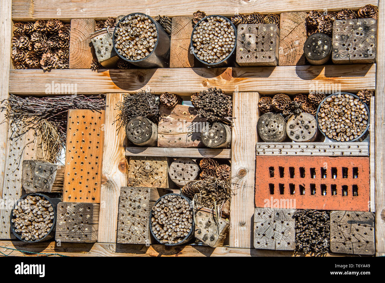 Insect hotel for brood care - Stock Image