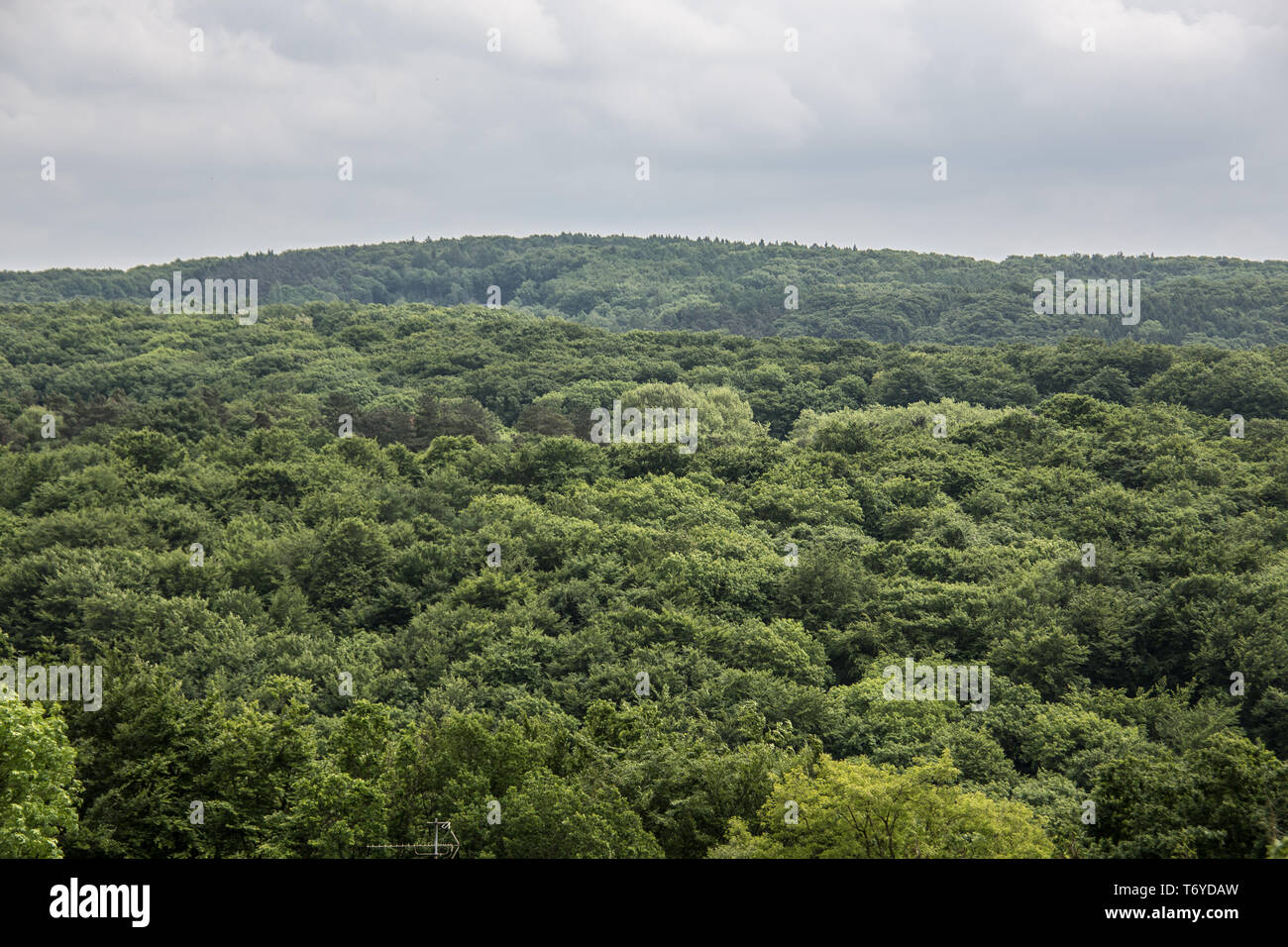 Woodland in the Ruhr area in Witten Stock Photo