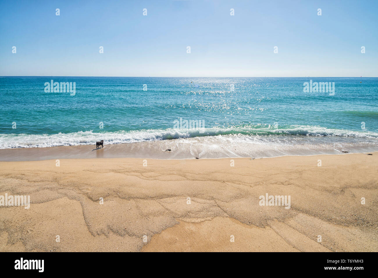 Front view of a dog enjoying with waves at seashore in a sunny day Stock Photo