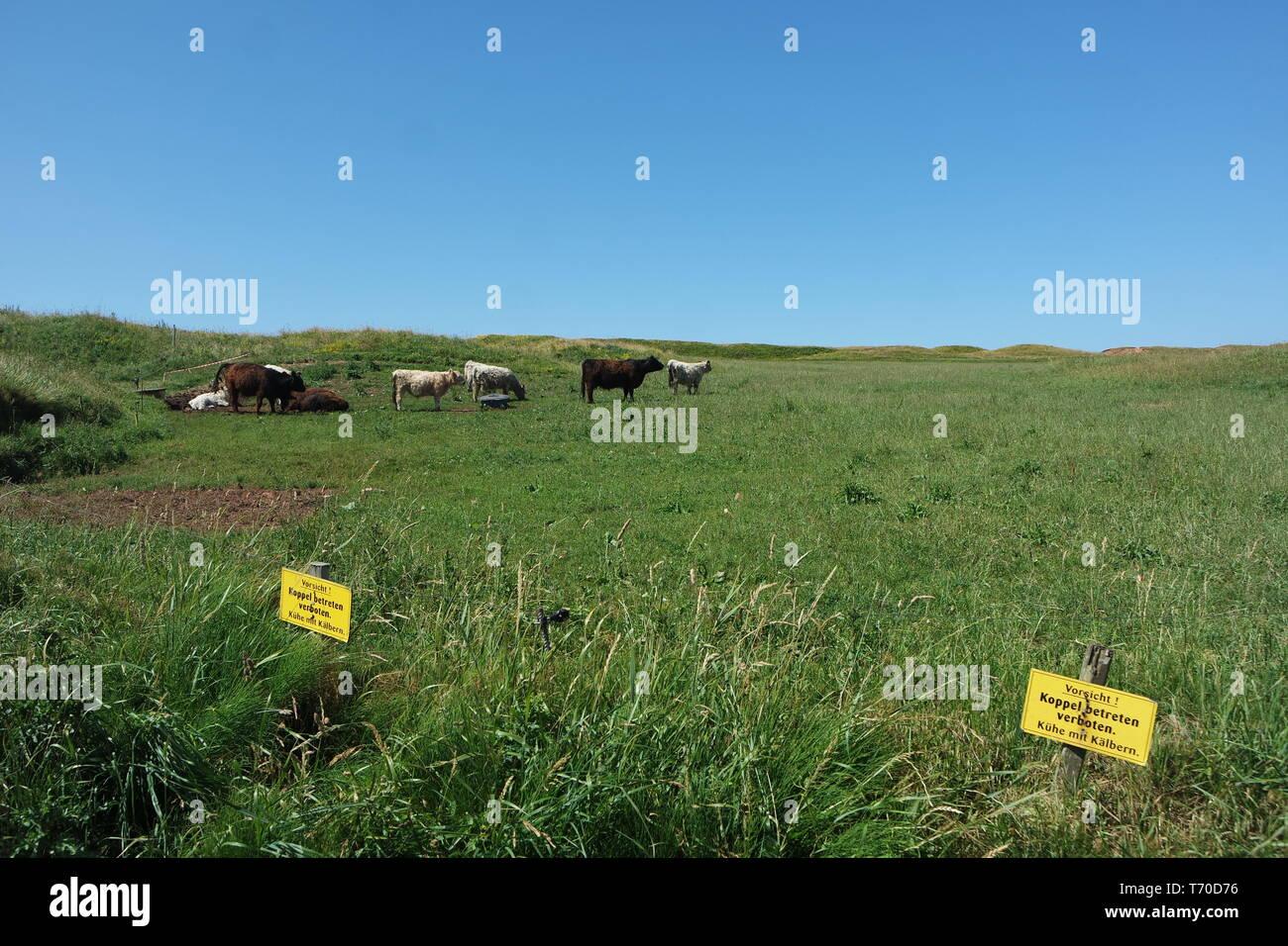 Pastureland on Heligoland - Stock Image