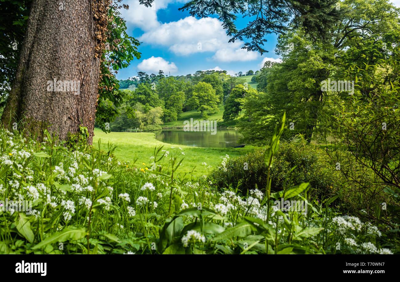 An informal English country garden in Spring. - Stock Image