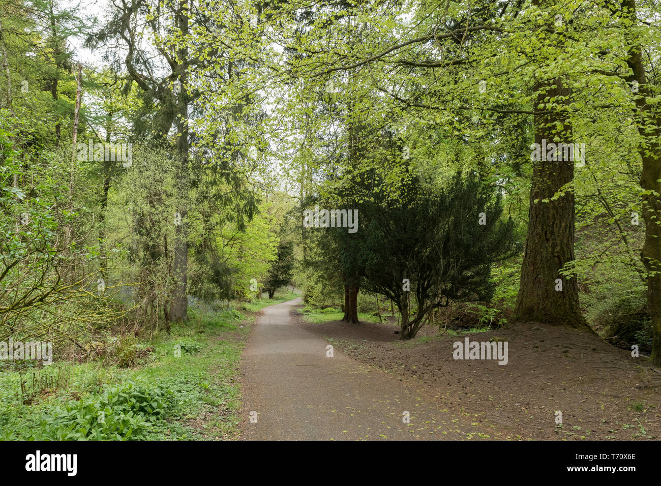 Cumbernauld Glen, an Outlander tv series film location, Cumbernauld, North Lanarkshire, Scotland, UK - Stock Image