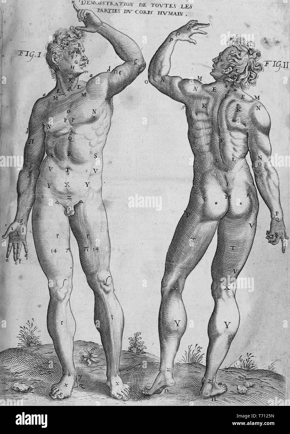 Engraving of two male figures, with numbered parts of the body, from the book 'Les oewres de chirurgie de Iacques Guillemeau, chirurgien ordinaire du Roy et Iure a Paris', 1825. Courtesy Internet Archive. () - Stock Image