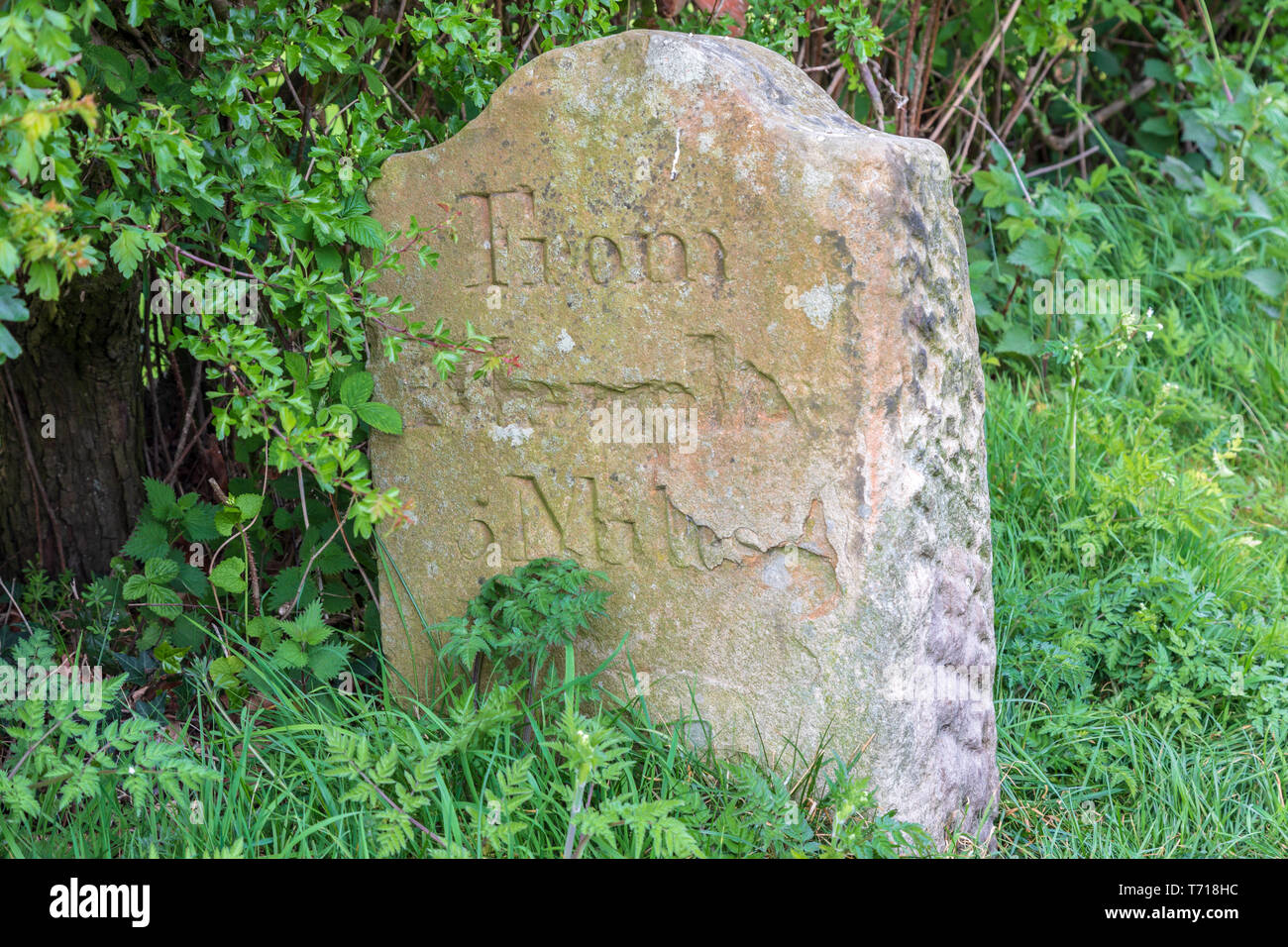 Stone milestone on the Macclesfield canal tow path.  The milestone reads From Marple 5 miles - Stock Image