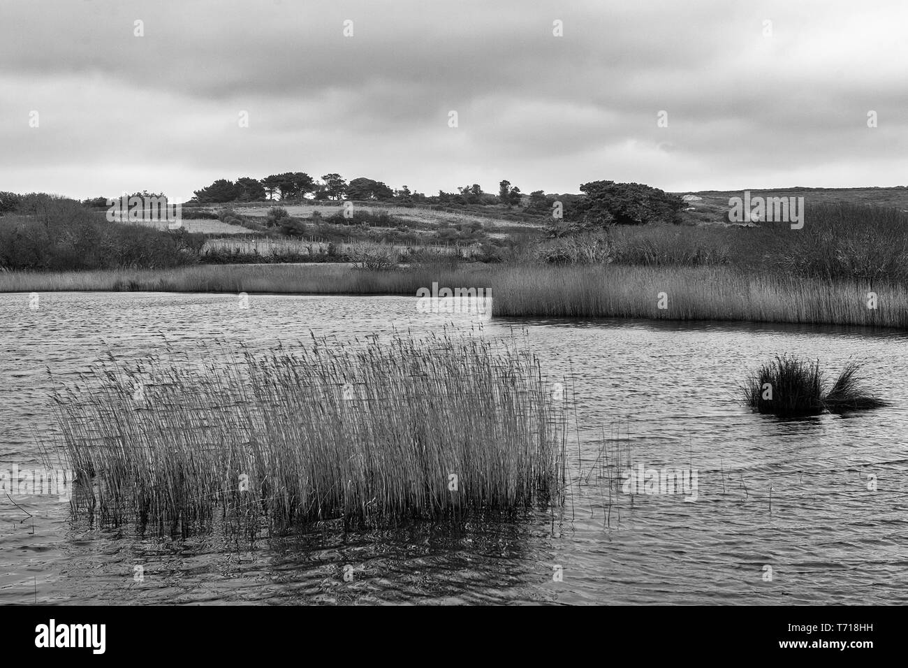 Porth Hellick Pool from the Higher Moors Nature Trail, St. Mary's, Isles of Scilly, UK: black and white version - Stock Image