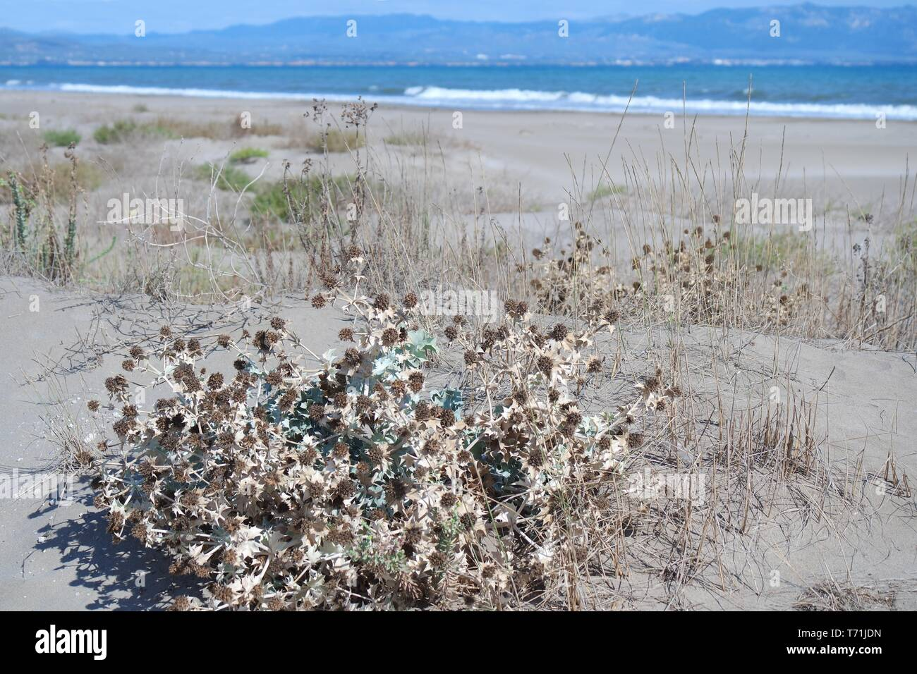 Sand dunes in the nature park Delta de l'Ebre Stock Photo