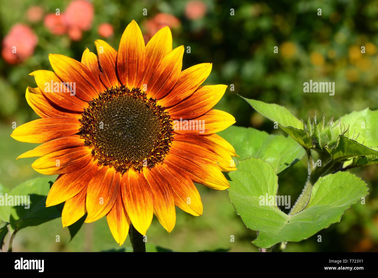 Flowers 848 - Stock Image