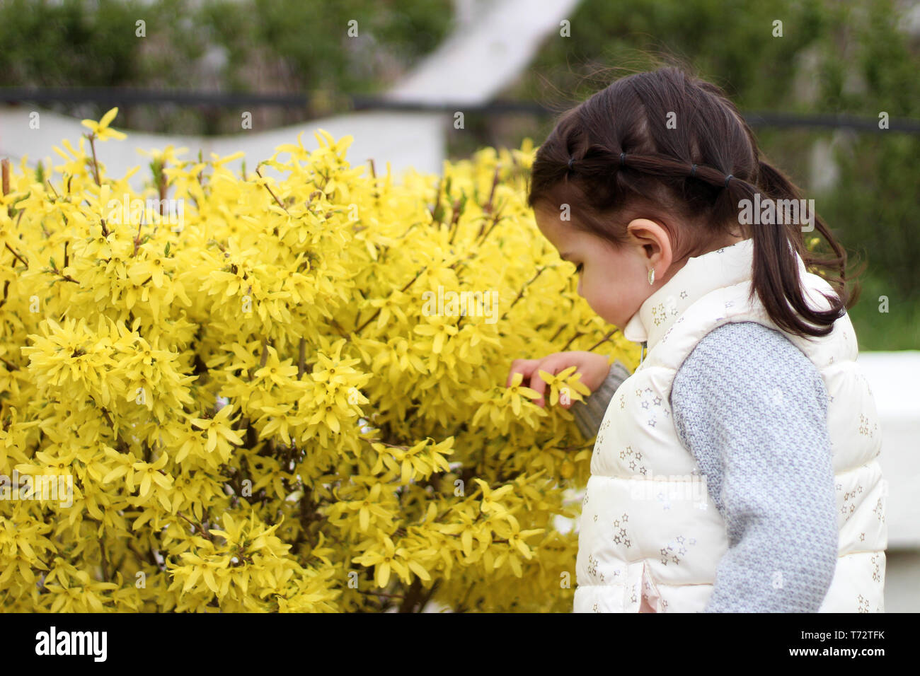 resentful little girl with ponytails looks at a bush with yellow flowers - Stock Image
