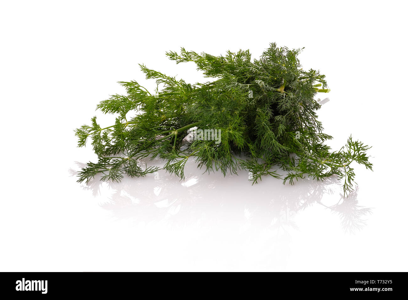 Dill green herbs focus stacking white isolated - Stock Image