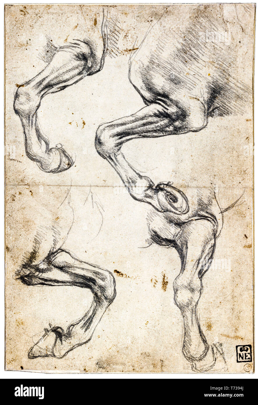 Leonardo da Vinci, Studies of Horse's Leg, chalk anatomical drawing, c. 1485 - Stock Image