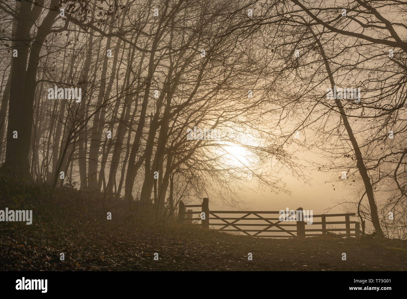 A milky sun rises through the mist under which a large five-bar gate blocks a path. Trees to either side of the path lean over it. Sepia tones. - Stock Image