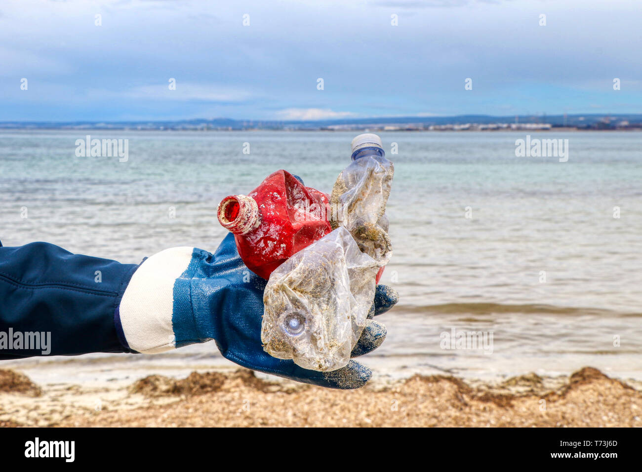 Woman collects plastic waste on a beach with covered shoreline of sea grass - Stock Image
