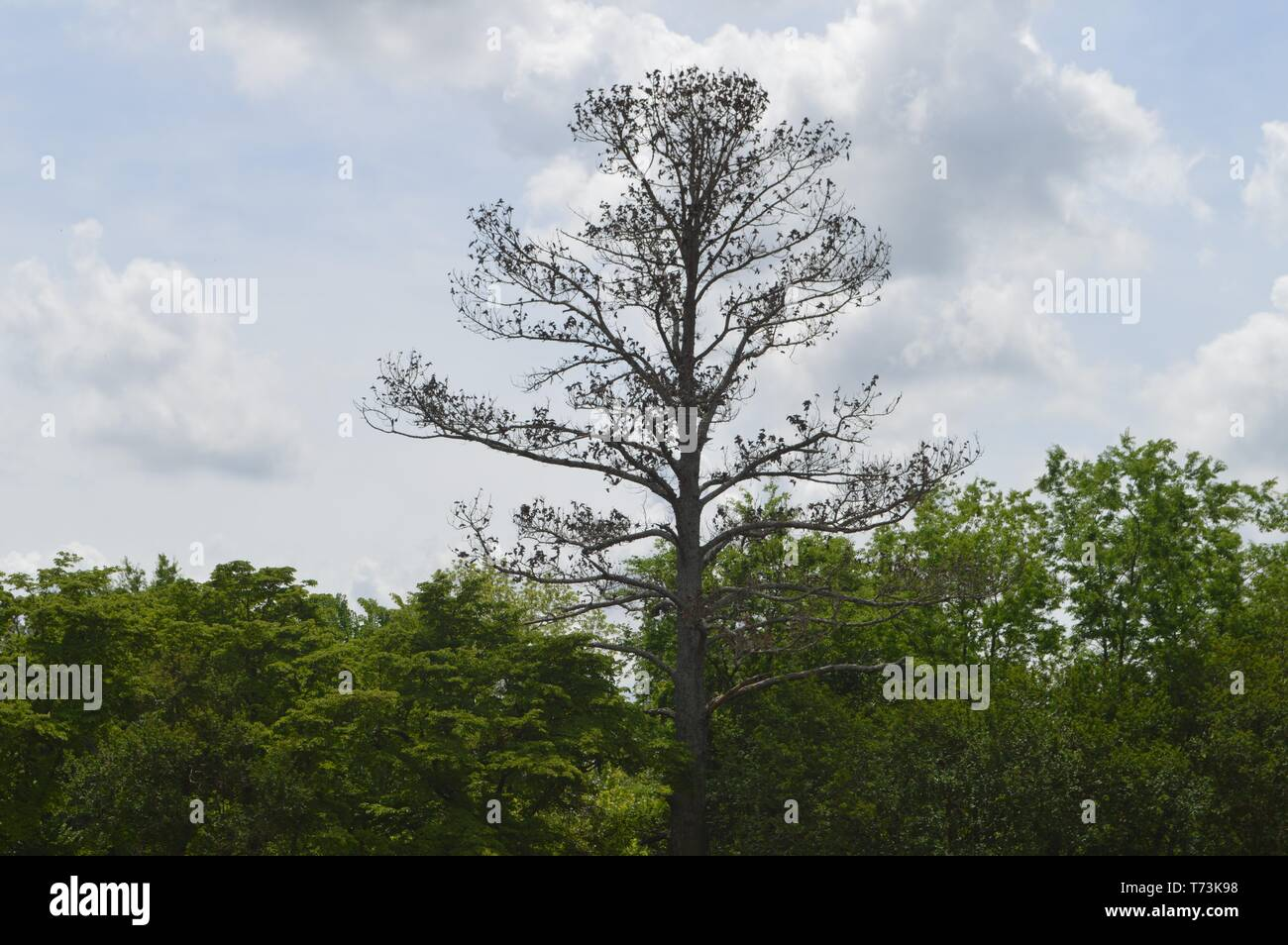 Single Unique Tree - Stock Image