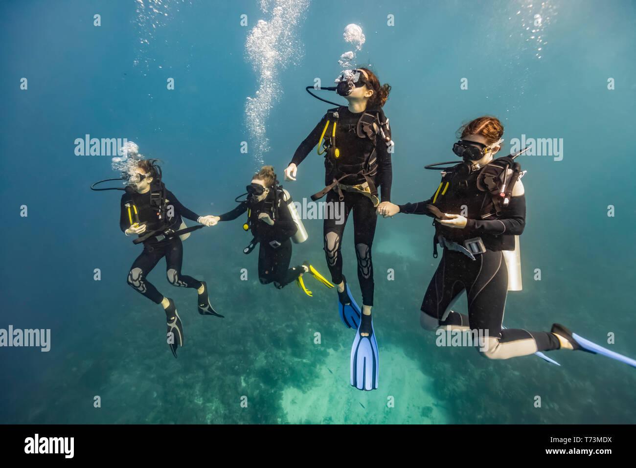 Scuba divers in Roatan Marine Park, West End Wall dive site; Roatan, Honduras Stock Photo