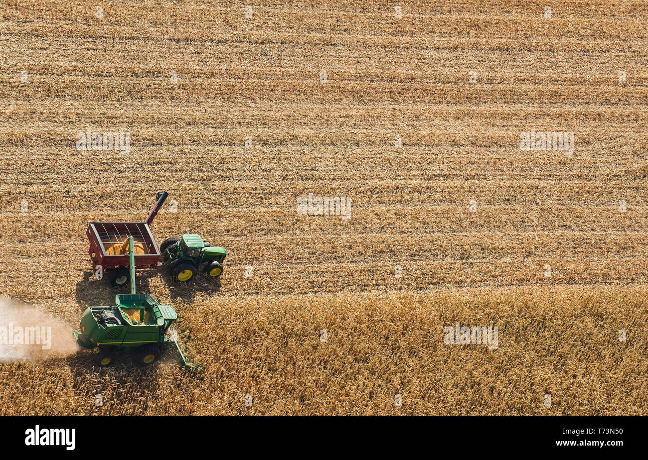 A combine harvester unloads soybeans into a grain wagon on the go during the harvest, near St. Adolphe; Manitoba, Canada Stock Photo