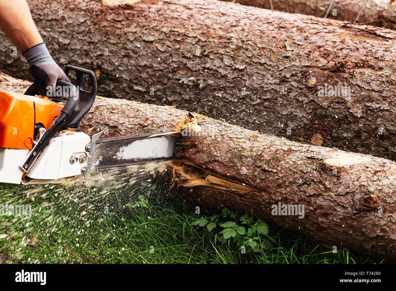 Strong man is cutting a tree with a chainsaw Stock Photo