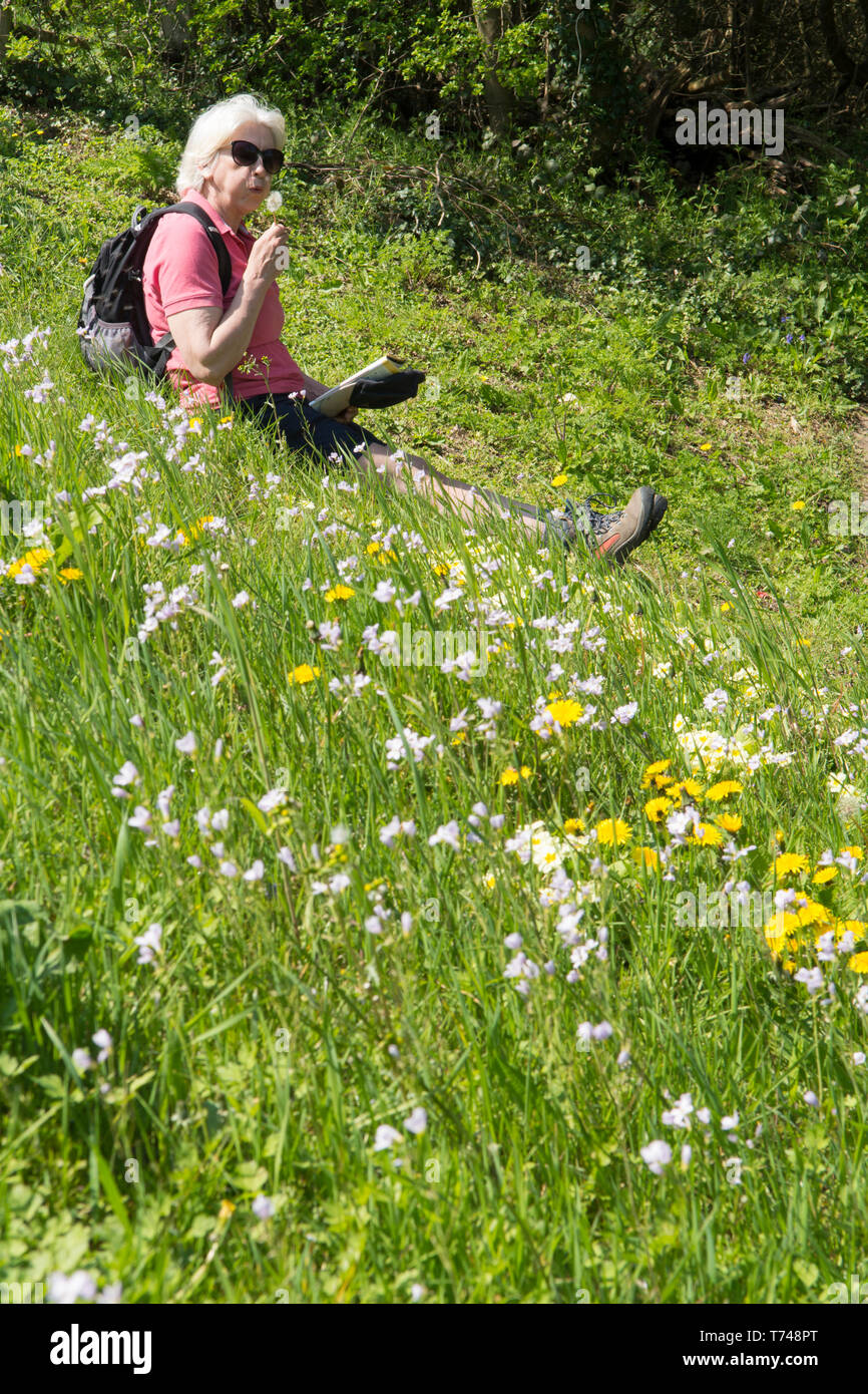 Mature woman in fifties resting while taking a walk in wild flowers, rucksack, map, shorts, appropriate clothing, Sussex, UK. Spring, April. Stock Photo