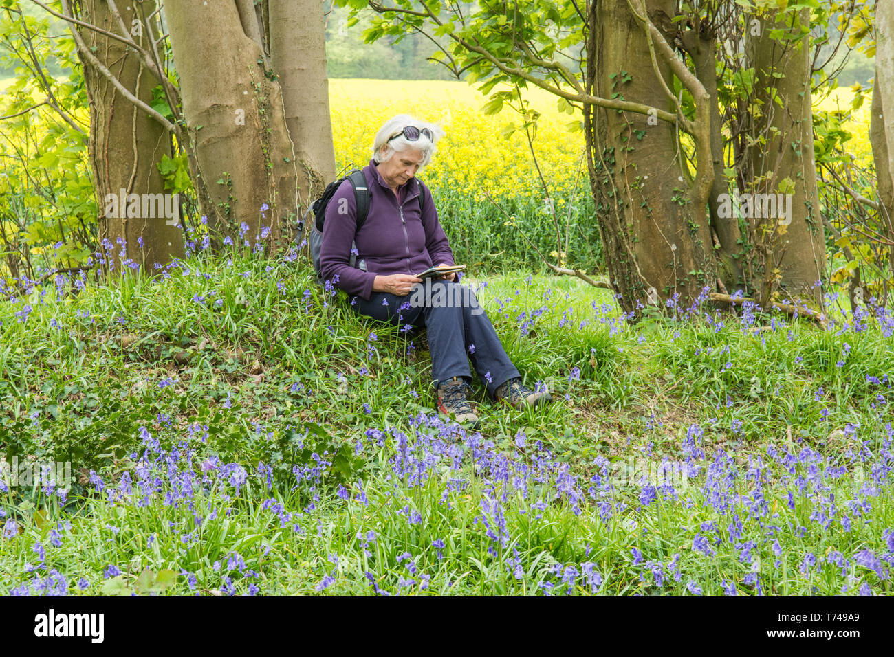 Mature woman sitting on bank, resting while on a walk in woodland among Bluebells, Hyacinthoides non-scripta, Sussex, UK, Stock Photo