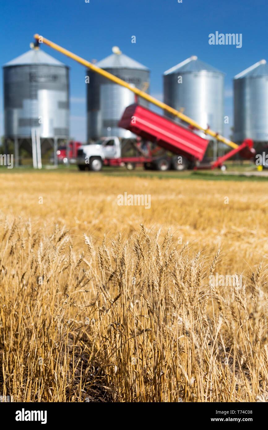 Grain Truck Stock Photos & Grain Truck Stock Images - Alamy