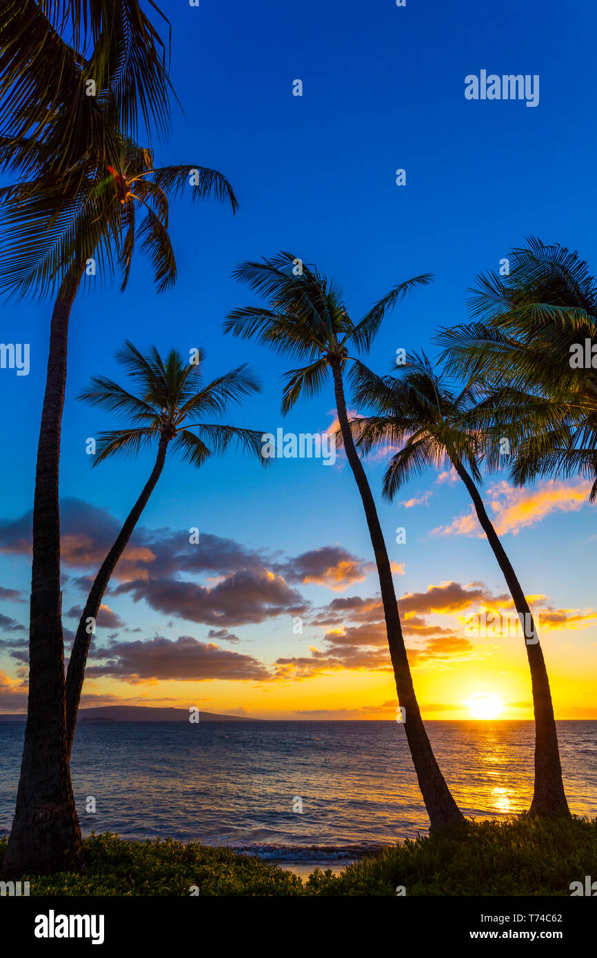 The sun setting through silhouetted palm trees; Wailea, Maui, Hawaii, United States of America Stock Photo