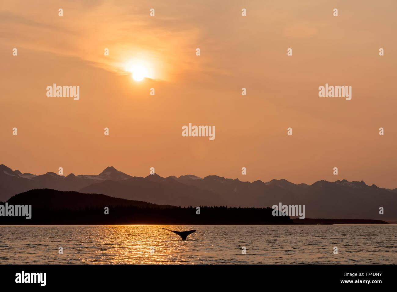 Fluke Stock Photos & Fluke Stock Images - Page 7 - Alamy