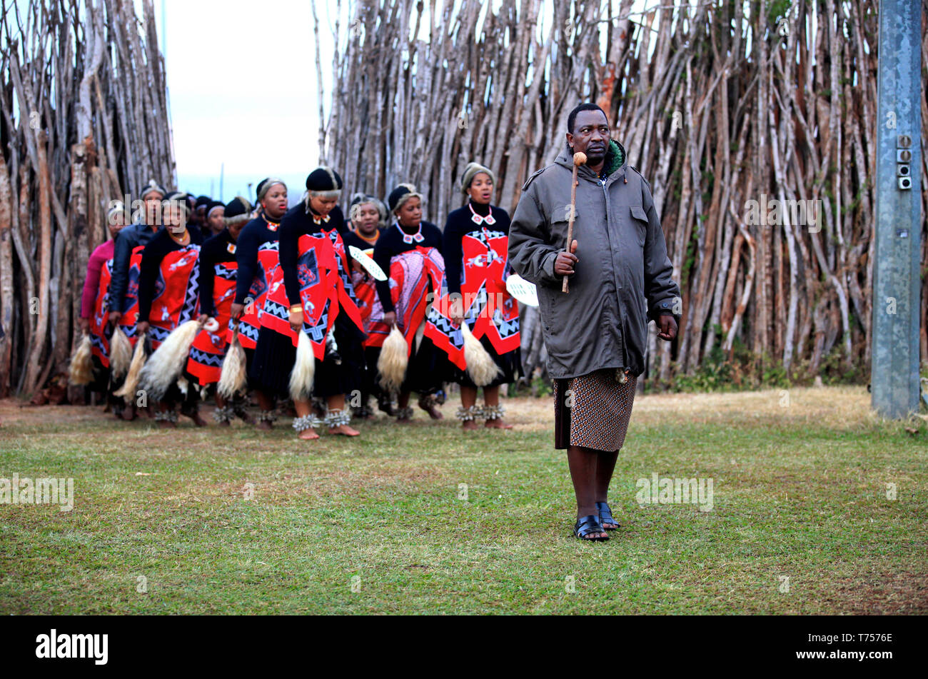 Day 2: The bride's uncles escorts the royal family out of the cattle kraal. Feasting on Lugege is an interlude to the song and dance before it commenc - Stock Image