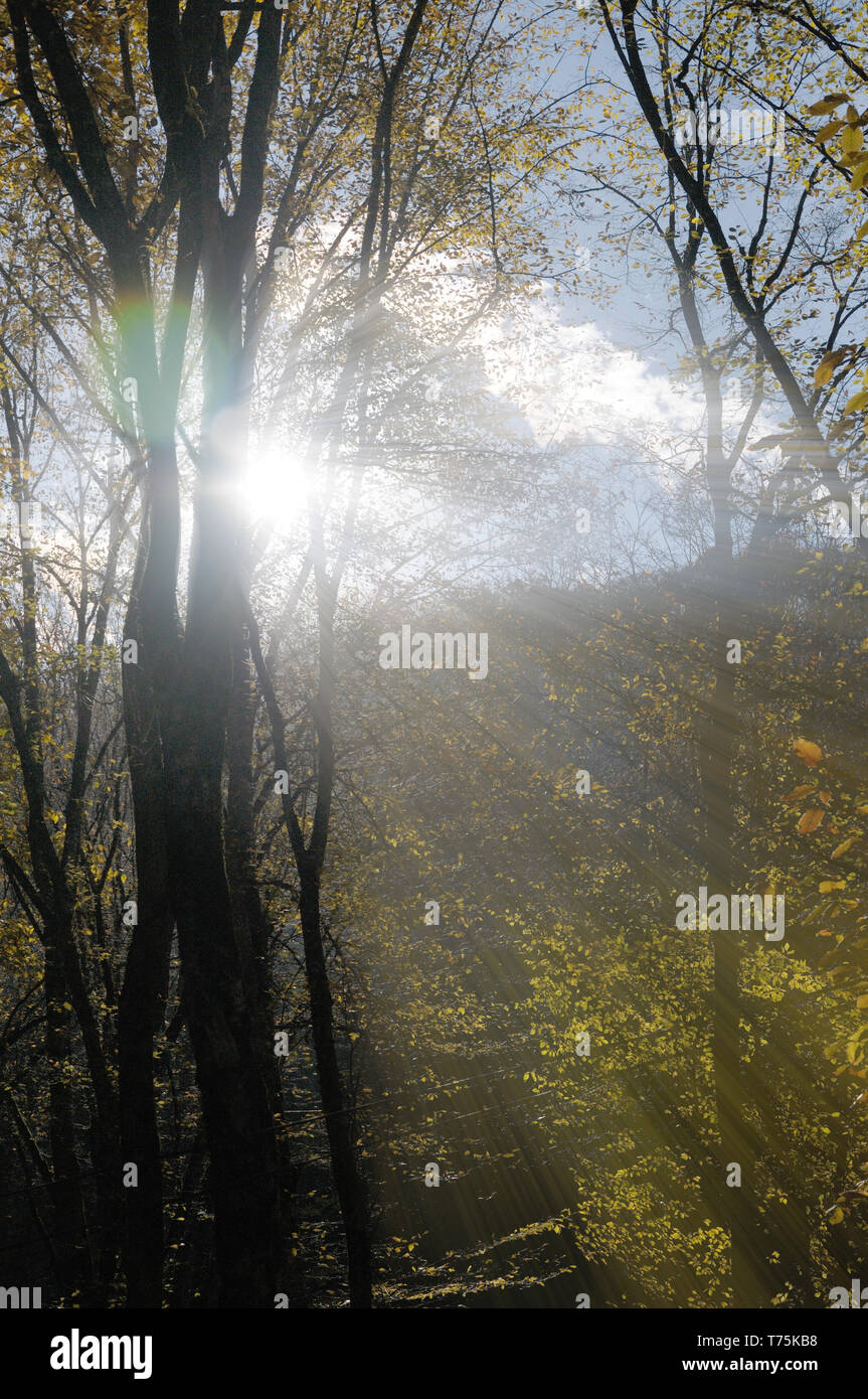Sunlight making its way through tree branches in the mountains.Azerbaijan,Caucasus - Stock Image