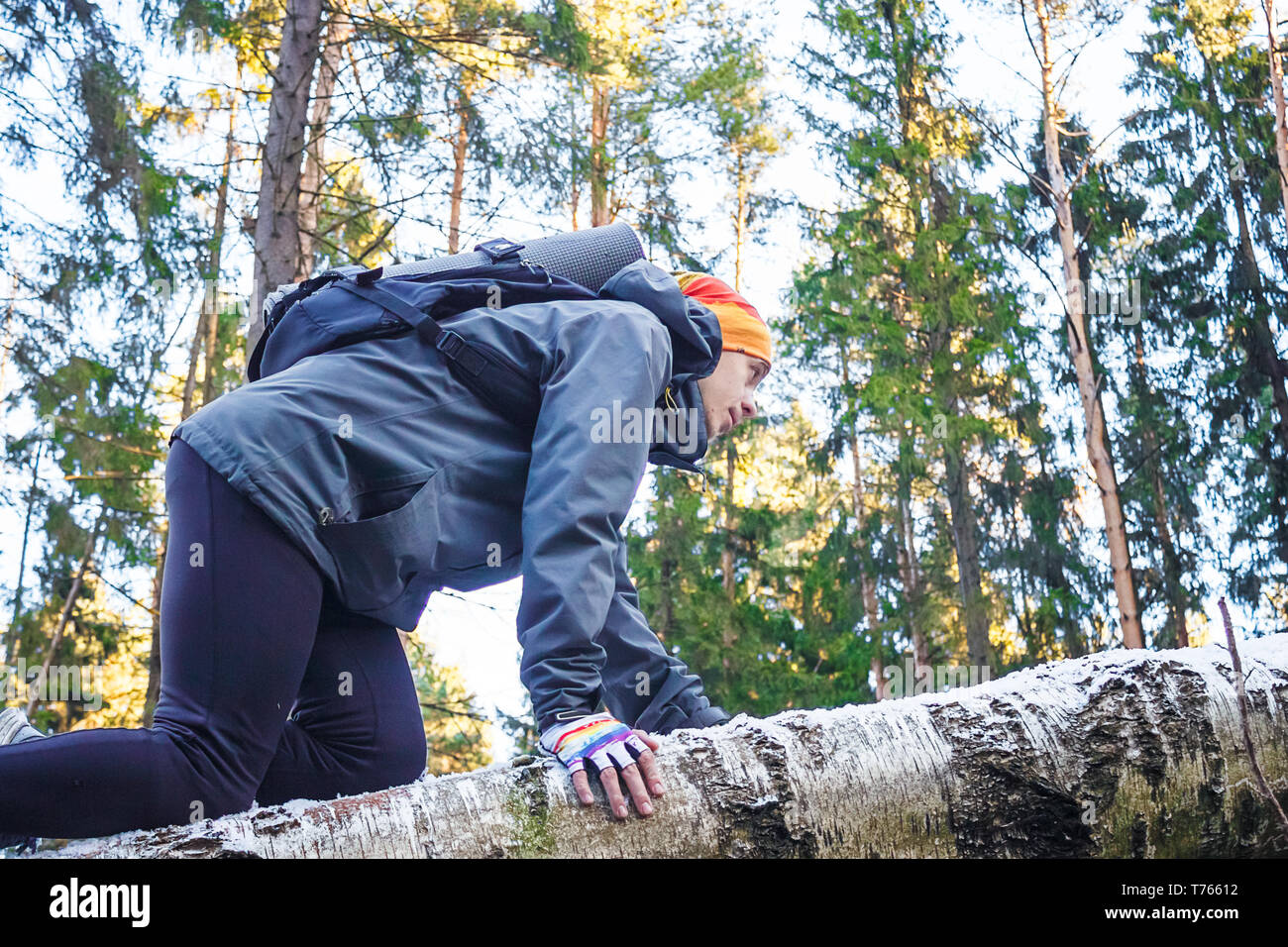 Young man with a backpack climbs onto a fallen birch in the forest - Stock Image