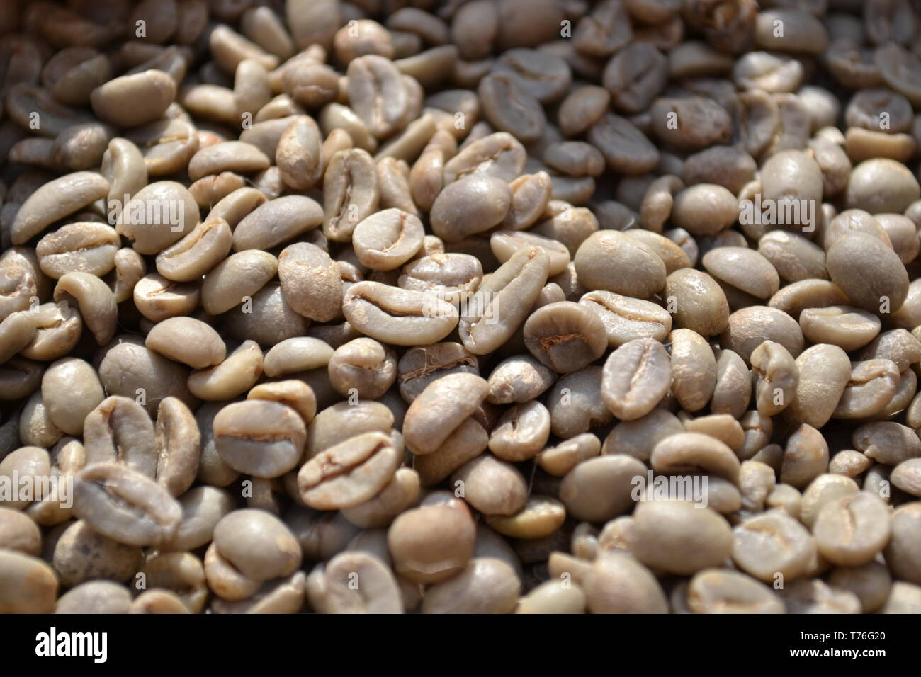 Unroasted Coffee Beans >> Unroasted Dry Green Coffee Beans Exposed In Daylight As Food