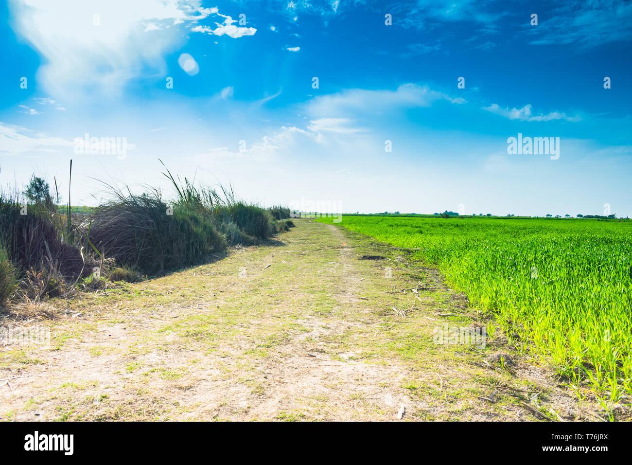 Punjab Farm Stock Photos Punjab Farm Stock Images Alamy