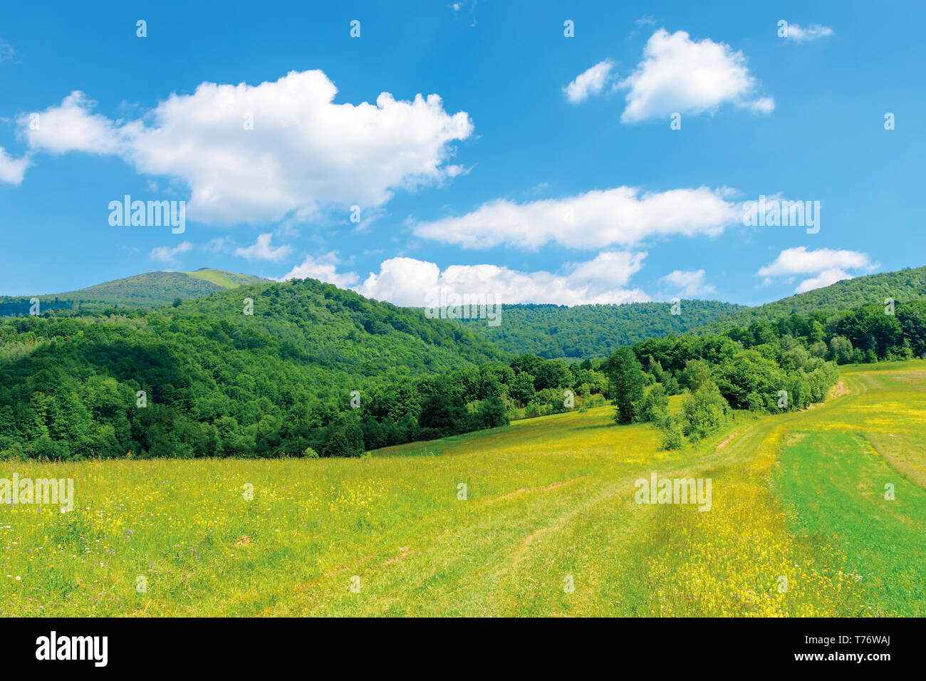 beautiful countryside landscape. wild flowers on rural field near the forest on a tranquil summer day. mountain ridge under cloudy blue sky - Stock Image