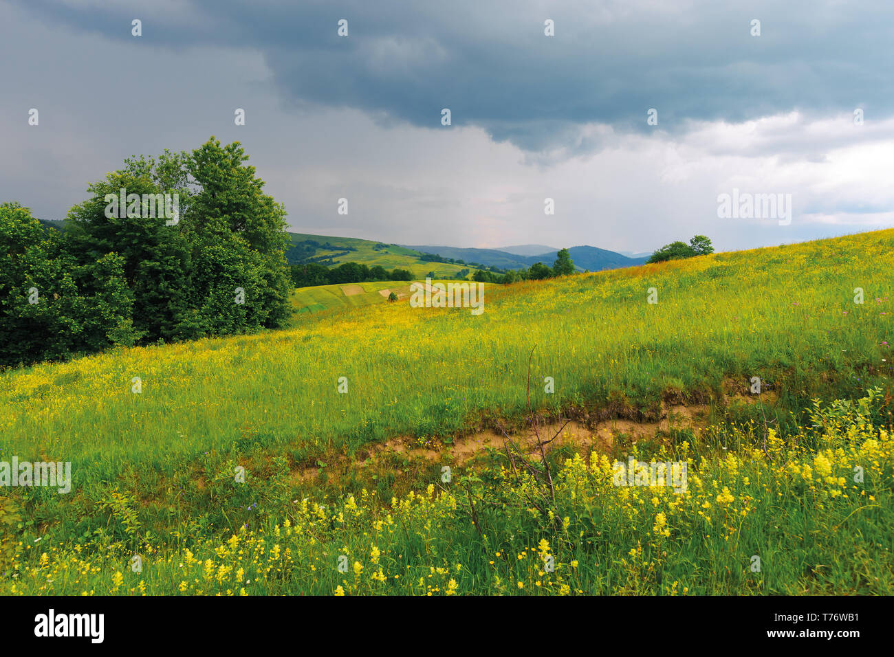 gloomy summer afternoon in mountains. trees on the edge of a rural field. wonderful countryside in dramatic weather before storm - Stock Image