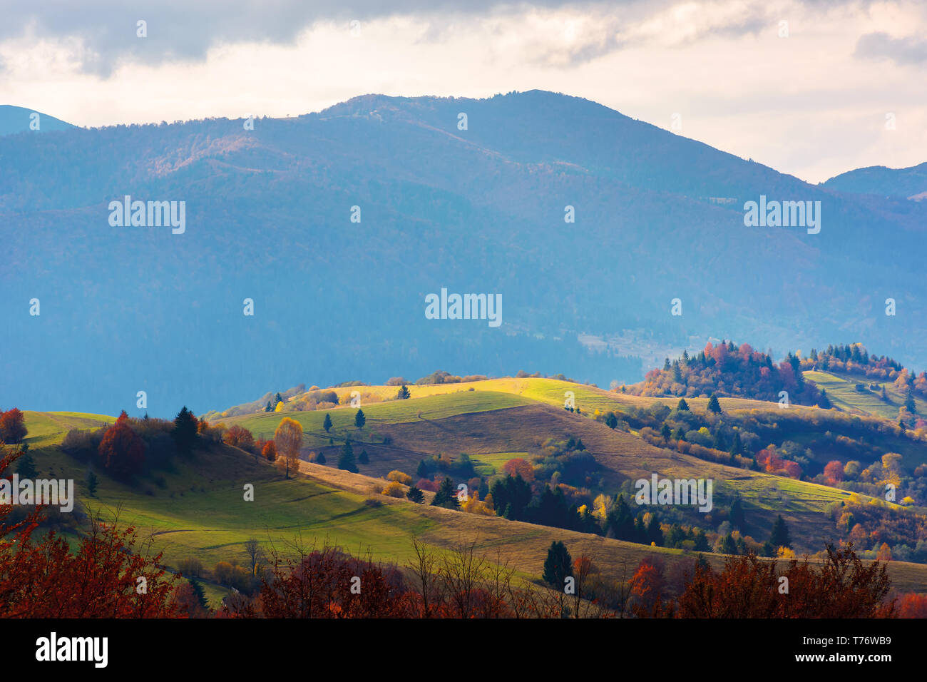 mountain rural area in late autumn season. agricultural field on a hill near the forest with red foliage. beautiful and vivid countryside landscape. - Stock Image