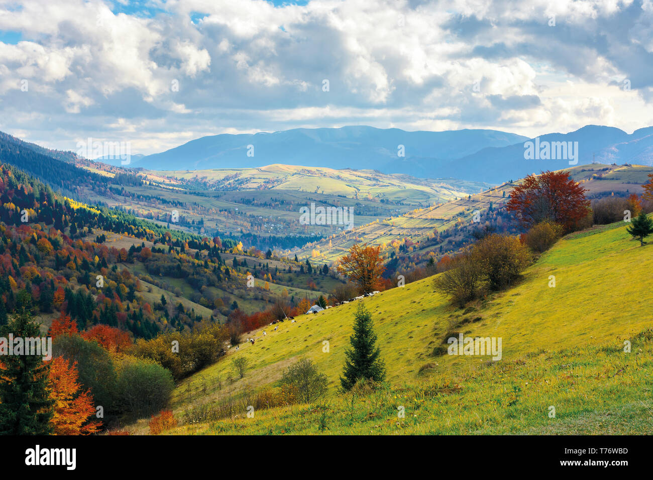 autumn landscape. village on the hillside. forest on the mountain covered with red and yellow leaves. over the mountains the beam of light falls on a  - Stock Image