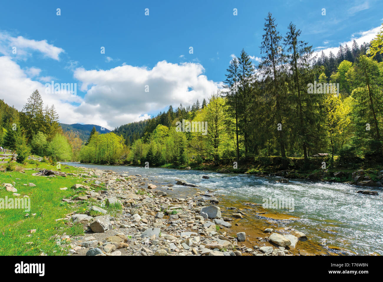 River flows among of a green forest at the foot of the mountain. picturesque nature of Carpathians  on a serene summer day under blue sky - Stock Image