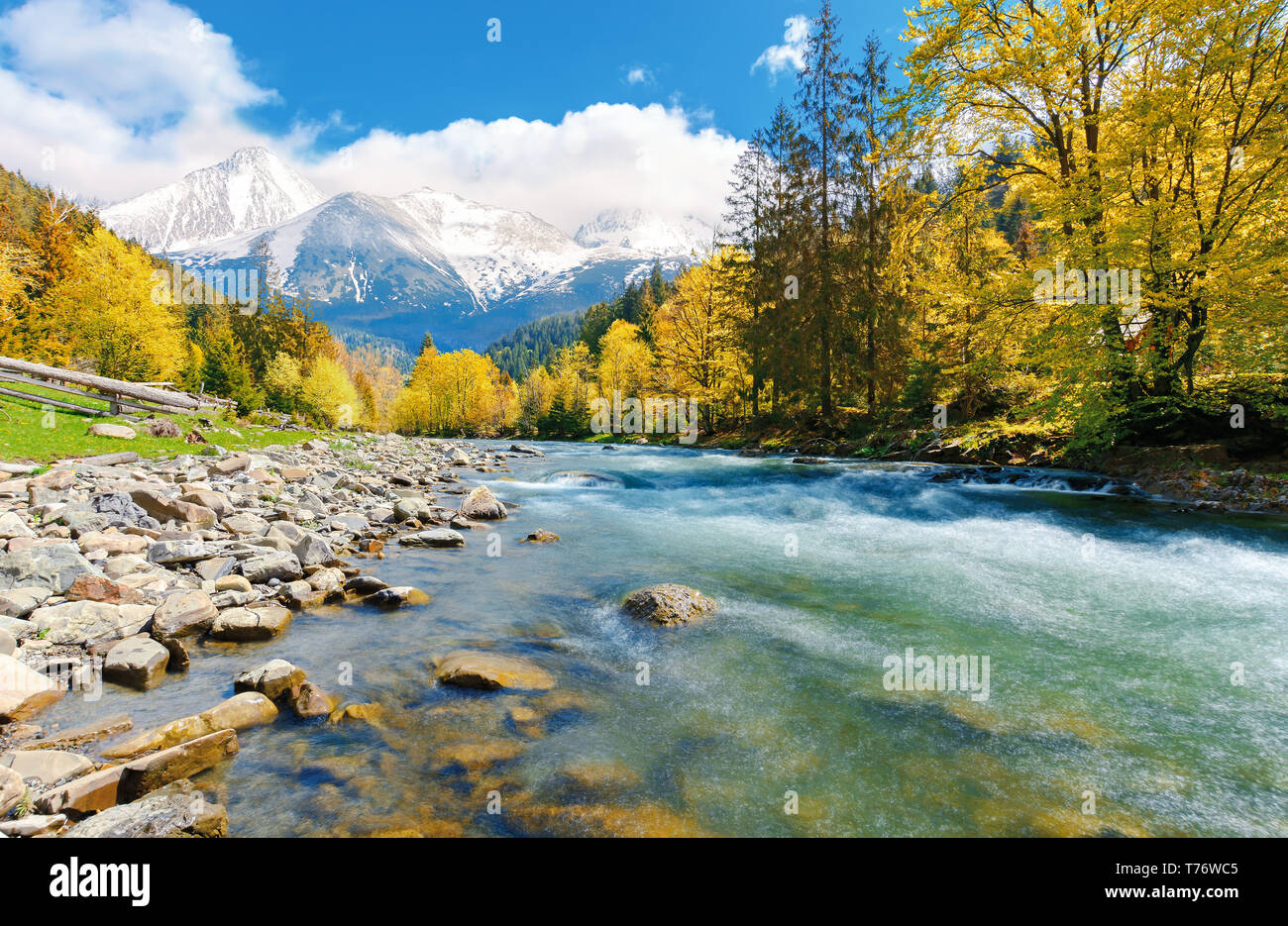 gorgeous day near the forest river in mountains. deciduous tree with vivid yellow foliage among spruce on the curve rocky shore. dreamy composite autu - Stock Image