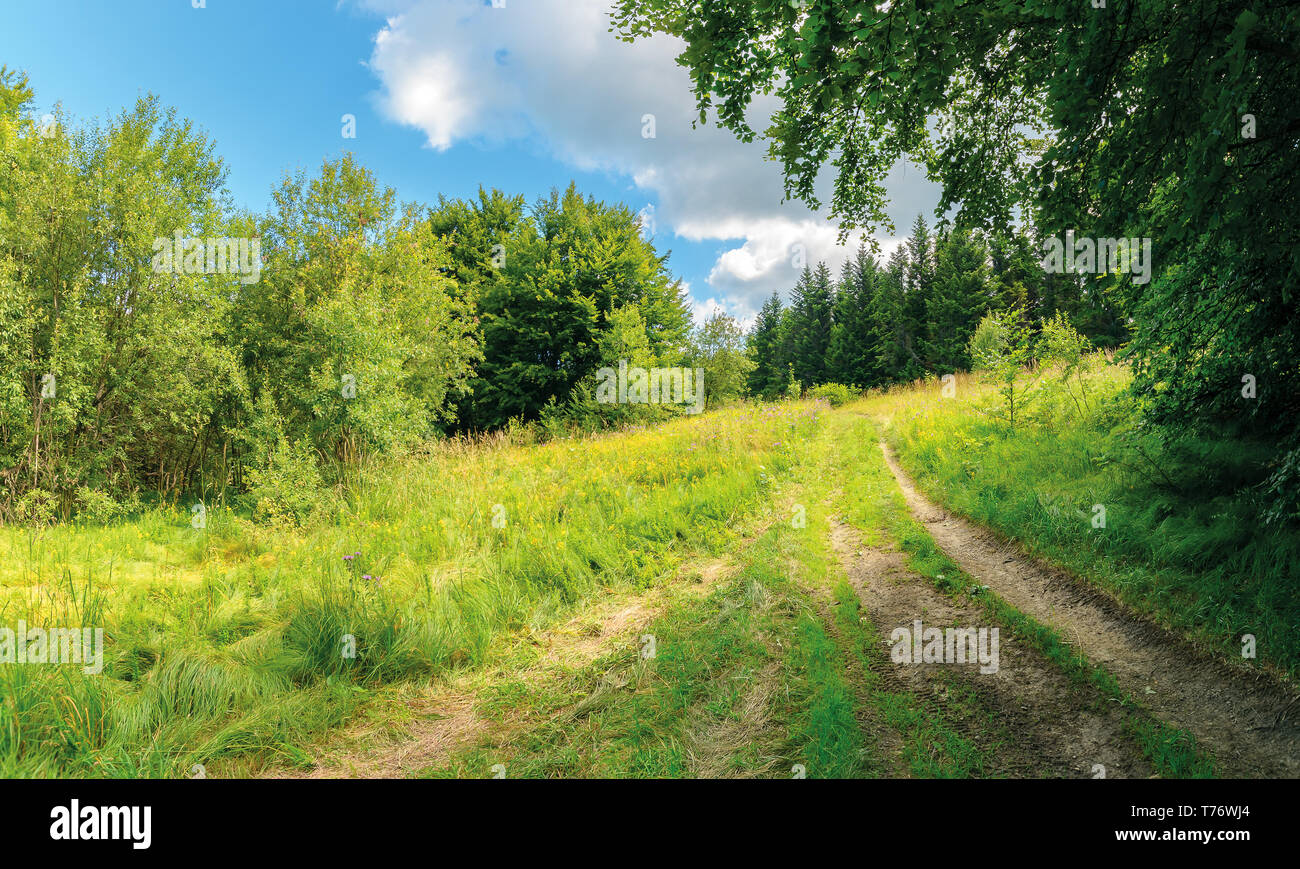 country road through forest in sun light. lovely transportation background - Stock Image