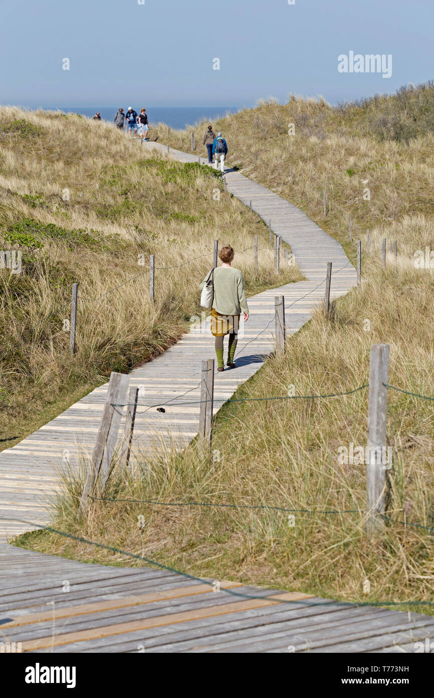 track through the dunes to the beach, Spiekeroog Island, East Friesland, Lower Saxony, Germany - Stock Image