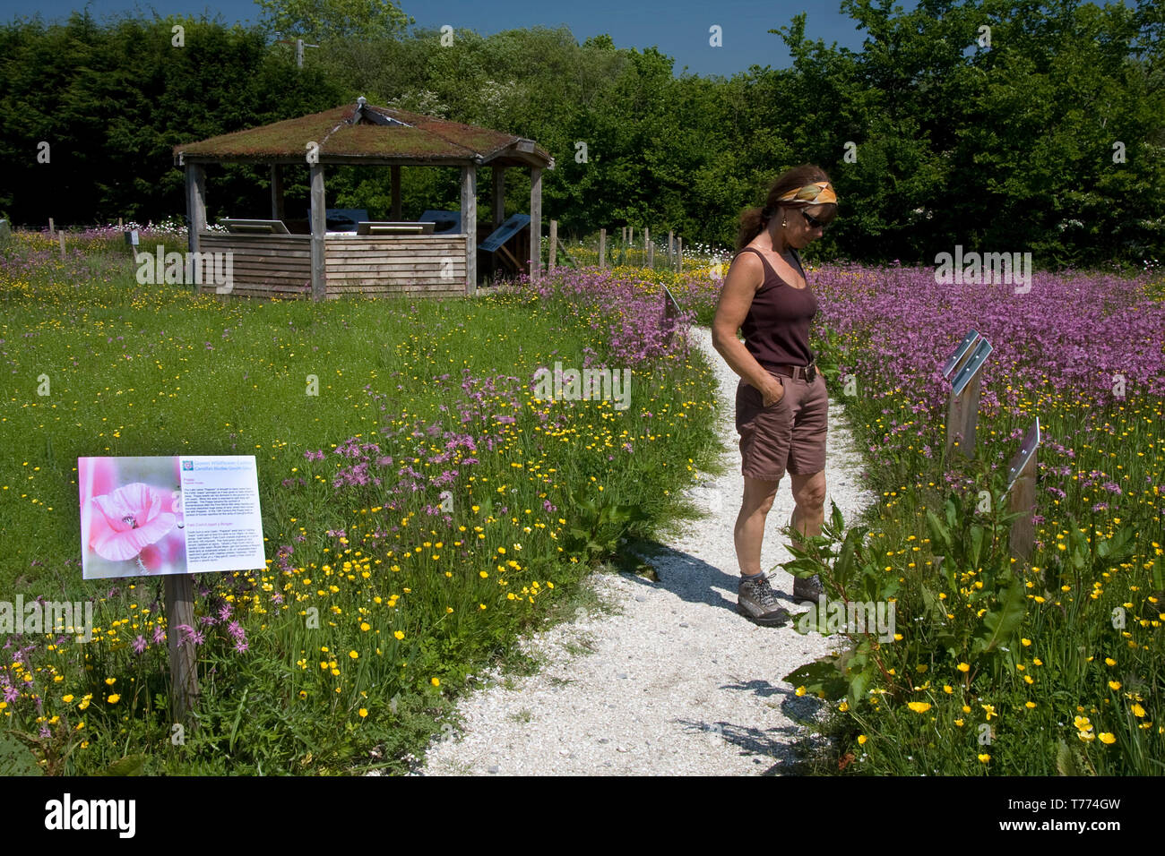 Gower Wildflower & Local Produce Centre, environmental garden, Gower Peninsula, South Wales - Stock Image