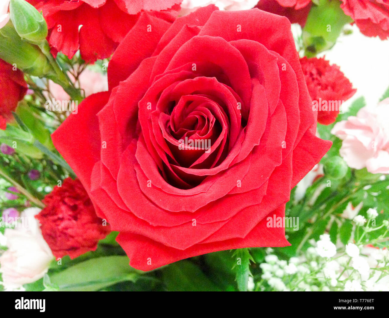 Detail of a red rose in a flower bouquet - Stock Image