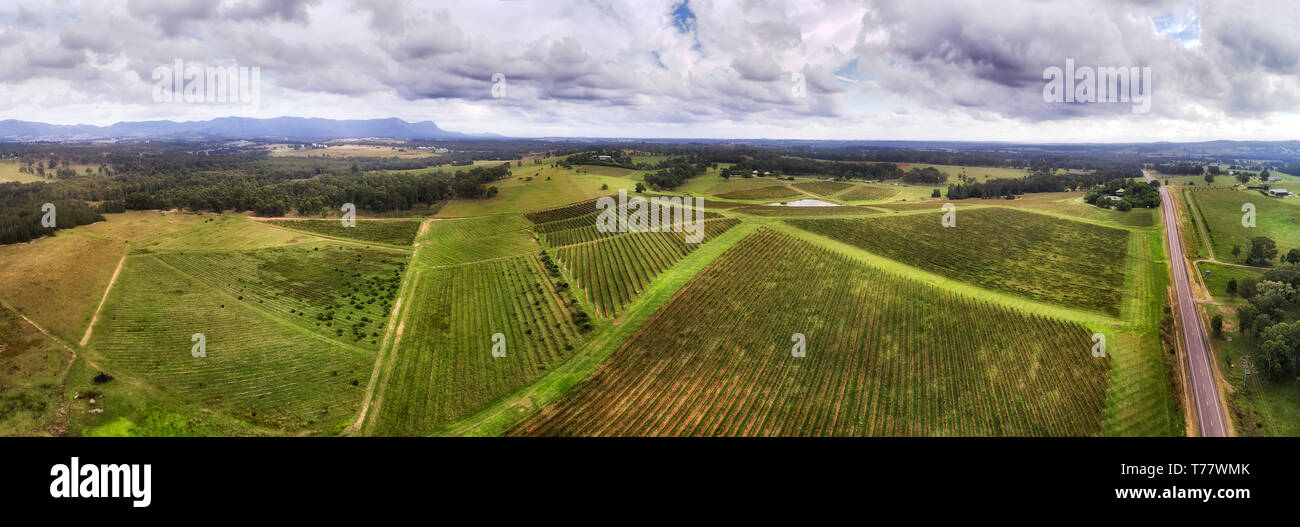 Vineyard grapes on hillsides of Hunter Valley winemaking farms in wide aerial panorama over patches of cultivated agricultural land. - Stock Image