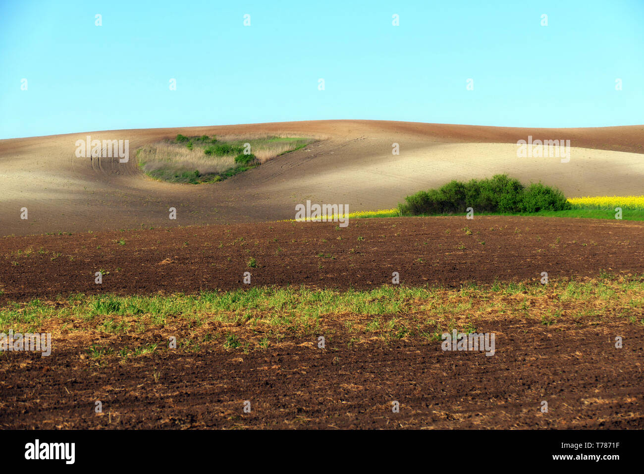 Agricultural land. Treated spacious field in the plane. Ploughing time. Spring. Flowering rape. Stock Photo