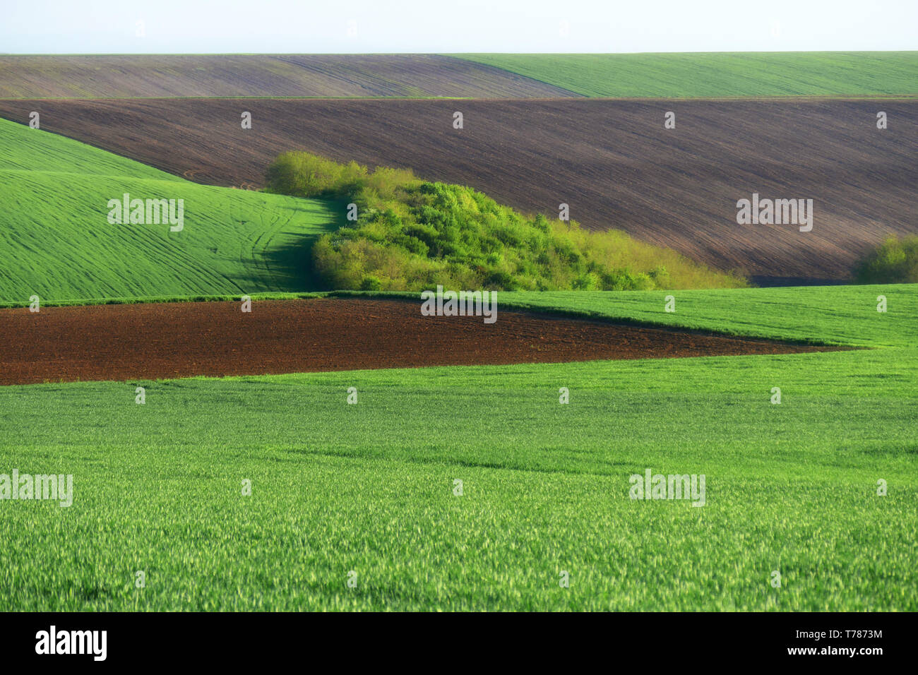 Green wheat fields. Agricultural land. Treated spacious field in the plane. Ploughing time. Stock Photo
